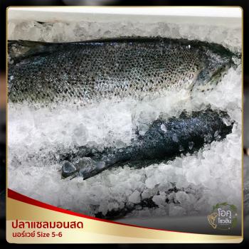 """ปลาแซลมอนสด นอร์เวย์ """"โอคุโชวฮิน"""" ศูนย์จำหน่ายขายส่งวัตถุดิบซูชิทุกประเภท ทั้งขายส่งและขายปลีก"""
