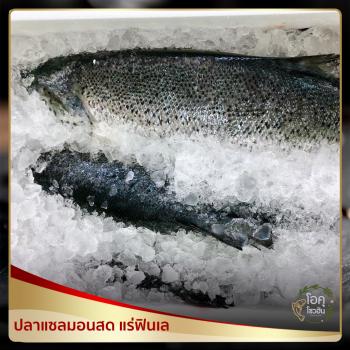"""ปลาแซลมอนสดแล่ฟินเล ขนาด 1.8 -2.0 กิโลกรัม/แพ็ค ราคาแล้วแต่สัปดาห์ """"โอคุโชวฮิน"""" ศูนย์จำหน่ายขายส่งวัตถุดิบซูชิทุกประเภท ทั้งขายส่งและขายปลีก"""
