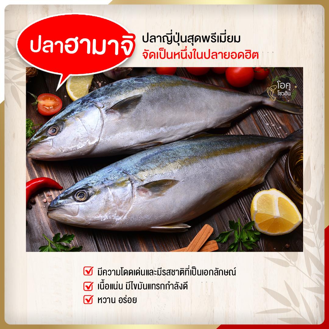 4 ปลาสุตฮิตที่นำมาเป็นวัตถุดิบซูชิ5 �โอคุโชวฮิน� ศูนย์จำหน่ายขายส่งวัตถุดิบซูชิทุกประเภท ทั้งขายส่งและขายปลีก
